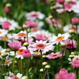 Impressionen aus dem heimischen Garten, Teil I