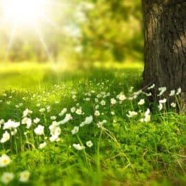Klimawiese: Für Klima und Artenvielfalt