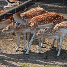 Ein Tag im Wildpark mit dem Junior & Freundin