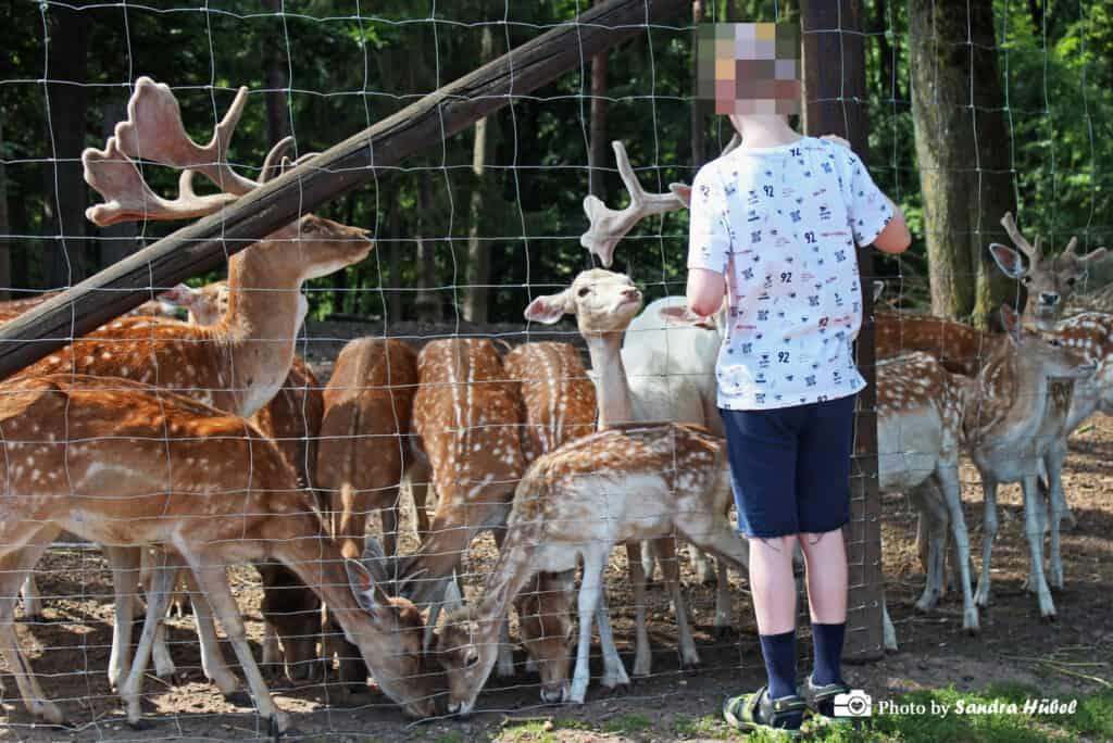 Der Junior verteilt das Futter gerecht unter allen Tieren!