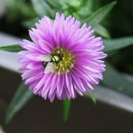 Kleiner Besuch auf großer Blüte