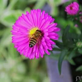 Ein süßer Brummer auf einer Blüte