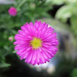 Eine schwebende Blüte – voll meine Farbe!