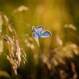 Schmetterlinge, einfach nur Schmetterlinge